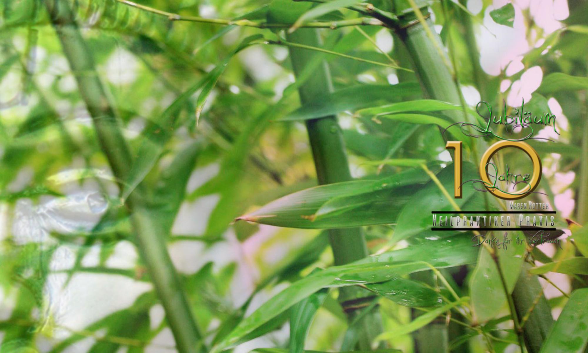 Praxis für Naturheilkunde und Ayurveda Medizin  - Maren Rotter